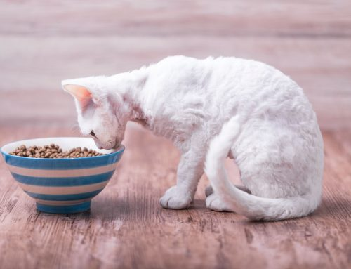 Best Cat Food for Weight Gain – The Complete Guide