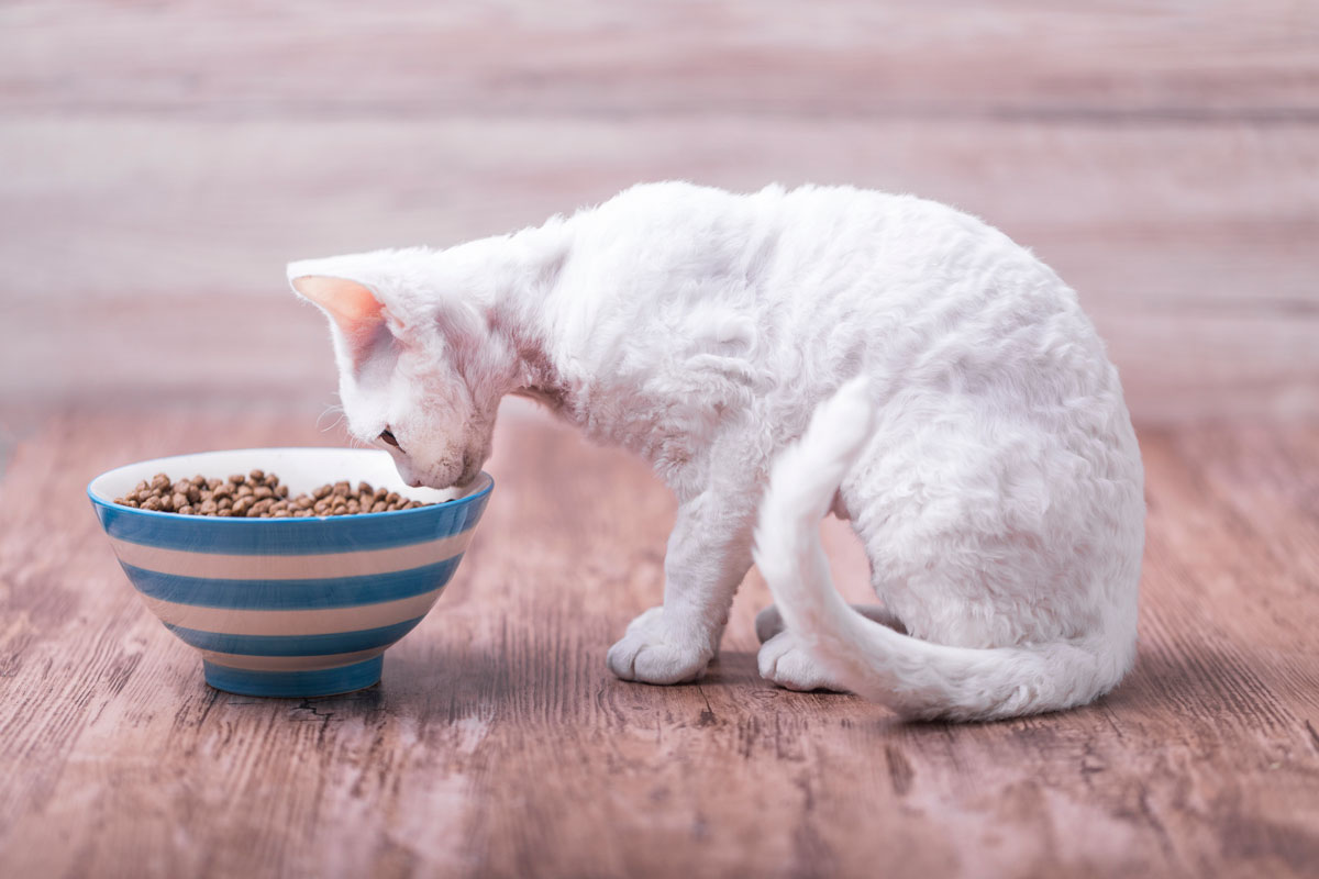 Cat Food for Weight Gain - The Complete Guide