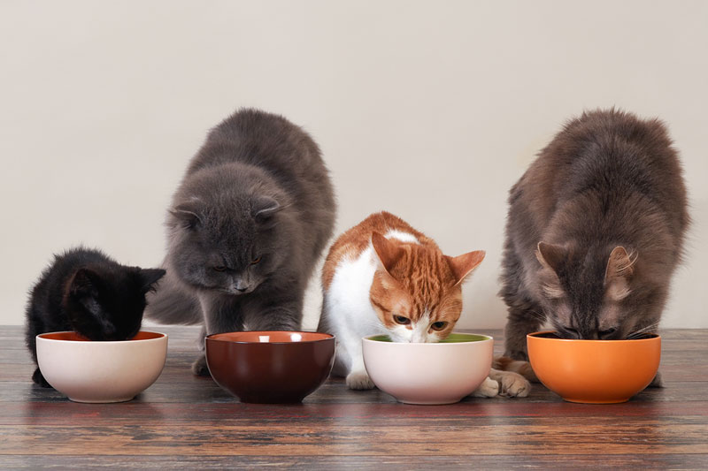 How Much and How Often Should You Feed Your Cat?