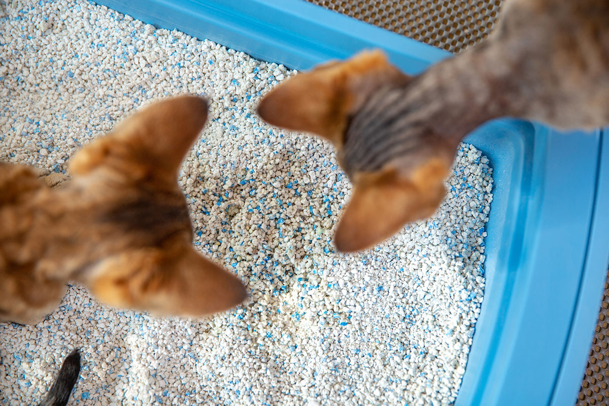 How Often Should You Change Cat Litter?