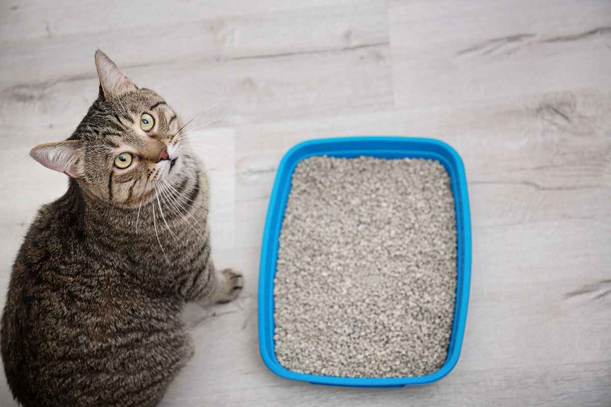 How to Get Your Cat to Use the Litter Box