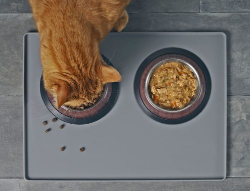 Should I feed my cat wet or dry food?