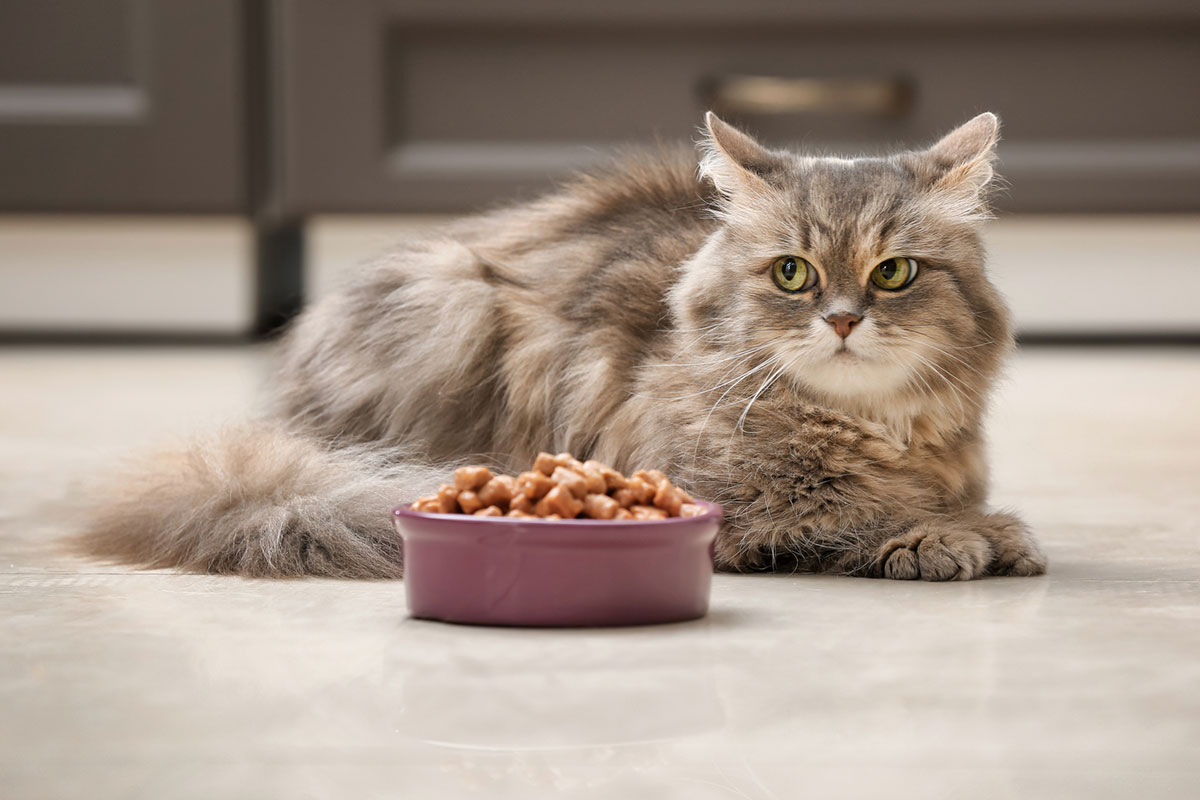 What to Feed a Cat That Won't Eat